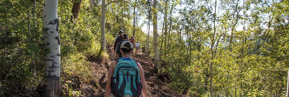 a guided hike being taken through aspen trees