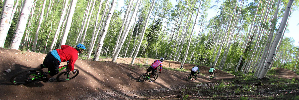 four mountain bikers with their backs facing going down a trail through aspens